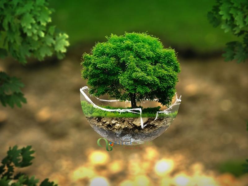 Çevre Danışmanlık Firmaları Ne İş Yapar?